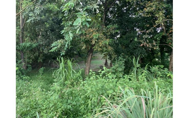 2500 m2 đất thổ cư tại Đồng Sương,Thành Lập, Lương Sơn, Hòa Bình.