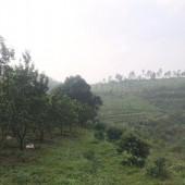 Bán ngay 500HA(500.000M2) ĐRSX đất đồi thoải đã có quy hoạch tại Kim Bôi giá rẻ LH:0987757698