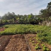 Cực HIẾM bán 1500M2 đất thổ tại Xuân Mai cách QL6 1KM có ao và tường bao kiên cố giá rẻ hơn 1tr/m2