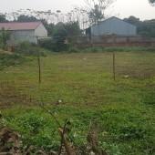 Hiện gia đình cần chuyển nhượng DT 650m2 cạnh nhà máy In Tiền xã Phú Cát, Quốc Oai, Hà Nội