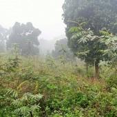 Giá đình cần bán thửa đất quá đẹp và siêu rẻ đt 2286m tại Tiến Xuân Huyện Thạch Thất Hà Nội