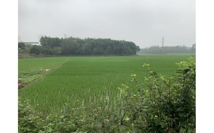 Bán 4370 m2 tại Hoà Sơn, Lương Sơn, Hòa Bình, 2,5 tỷ.