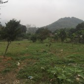 Bán đất thổ cư Lương Sơn, Hòa Bình, 2000m2, giá rẻ.