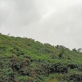 Bán lỗ 10HA ĐRSX Lương Sơn sổ sẵn cách đường Hồ Chí Minh 11km đường nhựa 400m oto vào đất giá 1TỶ