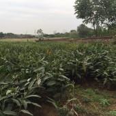 Đất thổ cư Quốc Oai, Hà Nội, 1100m2, view thoáng, giá rẻ. Lh: 0386781800