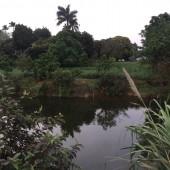 Chuyển nhượng 2900m2 Quốc Oai, Hà Nội, có ao, view hồ, đẹp thơ mộng.