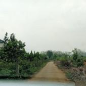 Bán đất đẹp 4200M2 400m2 đất ở  Phú Cát đất vuông bằng phẳng viu cánh đồng giá rẻ nhất 3xtr/m2.
