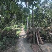 Khuôn viên nhà vườn nghỉ dưỡng 7000m2, 800m đất ở Thạch Thất, Hà Nội cần bán gấp.