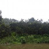 -Tại Yên Bình Thạch Thất còn lô đất 2500m2, 400m2 thổ cư, bám mặt hồ giá rẻ.