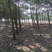 Bán mảnh 3600m2 ,250m đất ở , đường bê tông rộng , đất bằng phẳng giá cực ưu tại Lương Sơn Hoà Bình , LH:0962941645