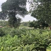 Bán 1800m2 bám mặt hồ , có thể làm nhà ở đất vườn , kho xưởng hoặc đầu tư sinh lời tại lương sơn hoà bình , giá rẻ LH:0962941645