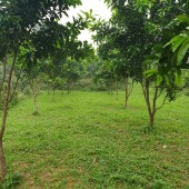 Cần chuyển nhượng  gấp 3000m2 khuôn viên nhà vườn phẳng lỳ, vuông góc tại Lương Sơn Hòa Bình.