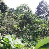 Nhanh tay sở hữu khuôn viên hoàn thiện 7000m2, 8000m2 thổ cư, View cánh đồng giá rẻ.