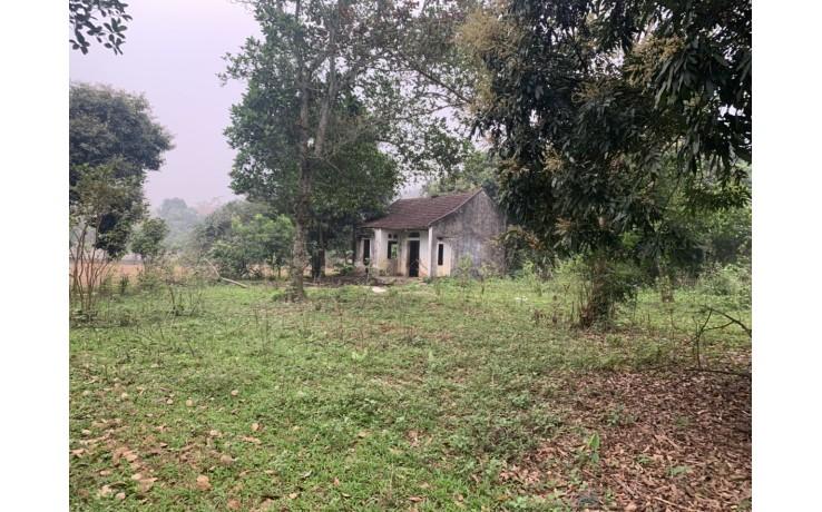 Bán nhà vườn chính chủ 10 550 m2 tại Cư Yên, Lương Sơn, Hoà Bình.  Giá 4,1 tỷ.