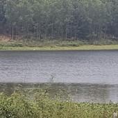 Gia đình cần chuyển nhượng 30000m sinh thái nghỉ dưỡng viu hồ tuyệt đẹp giá thật hấp dẫn