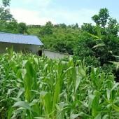 Chính chủ cần bán lô đất DT 5700m tại Yên Trung Thạch Thất Hà Nội