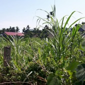 -Bán đất tại xã Yên Bình Thạch Thất Hà Nội, diện tích 720m2, có 200m2 đất ở.