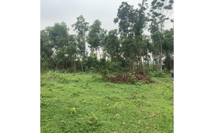 Bán 4937 m2 đất tại xã Hòa Sơn, Lương Sơn, Hoà Bình. 4,2 tỷ