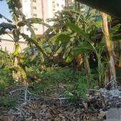 Bán đất Phú Cát, Cần bán 90m2 tại khu tái định cư Bắc Phú Cát