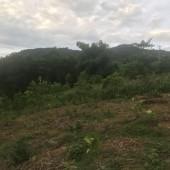 -Bán đất nghỉ dưỡng tại Phú Mãn Quốc Oai Hà Nội diện tích 4680m2