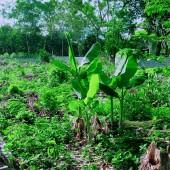 Cần bán gấp mảnh đất  2100m siêu đẹp tại lương sơn hòa bình