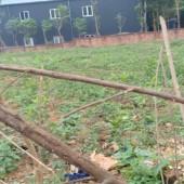Bán đất tại Bãi Dài Tiến Xuân Thạch Thất Hà Nội 1950m2