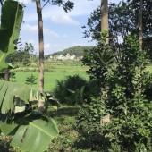 Bán đất đẹp tại Xã Yên Bình Thạch Thất Hà Nội 500m2