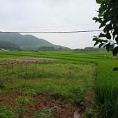 * Bán mảnh đất 2600m2 ,400m2 đất ở.  Giá yêu thương cho các nhà đầu tư.