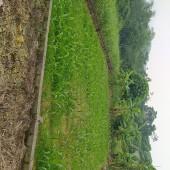 Chính chủ cần bán gaapss lô đất tổng Dt 1200m2 có tận 800m2 đất ở tại ba vì hà nội
