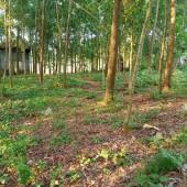 :100::100::100: chính chủ gửi bán gấp tổng DT 7560m có 1500m đất ở còn lại đất vườn trồng cây lâu năm