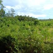 Cần bán đất rừng sản xuất có địa thế đẹp, gần khu dân cư, có đường cho xe ô tô vào đến tận nơi, có khe suối chảy qua với phong cảnh hữu tình. Thuận lợi cho làm trang trại, khu nghỉ dưỡng, du lịch sinh thái… diện tích 11452.0m2, có giấy chứng nhận quyền sử