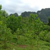 Cần bán đất vườn trồng cây lâu năm tại xã lâm sơn huyện lương snh hòa bình, đất có địa thế đẹp, cạnh có suối nước chảy qua với phong cảnh hữu tình. Thuận lợi làm khu nghỉ dưỡng cuối tuần, nhà ở của gia đình. Diện tích trong sổ là 868m2, tổng diện tích cả