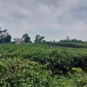 chính chủ cần bán nhanh lô đất DT 2186m có 200m đất ở tai thôn muỗi yên bài ba ì hà nội Khu vực :Bán Đất tại Huyện Ba Vì Hà Nội