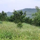 chính chủ cần bán gấp lô đất DT 2480m2 có 300m2 đất ở còn lại đất vườn tại phú mãn quốc oai hà nội Khu vực :Bán Đất tại Huyện Quốc Oai Hà Nội
