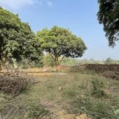 Bán đất sinh thái nghỉ dưỡng tại Hòa Sơn, Lương Sơn, Hòa Bình. Nhiều cây ăn quả lâu năm.