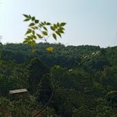 Bán đất thuộc xóm Vai Đào, Cao Răm, Lương Sơn, Hoà Bình. LH: 0988681666