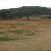 Bán đất Bùi Trám, Hòa Sơn, Lương Sơn, Hòa Bình. Sẵn cây ăn quả lâu năm, tường vây xung quanh.