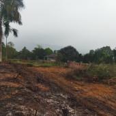 Bán đất tại xã Yên Bài Ba Vì Hà Nội diện tích 1860m2.