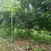 Bán đất tại xã Yên Bài Ba Vì Hà Nội diện tích 1808m2.